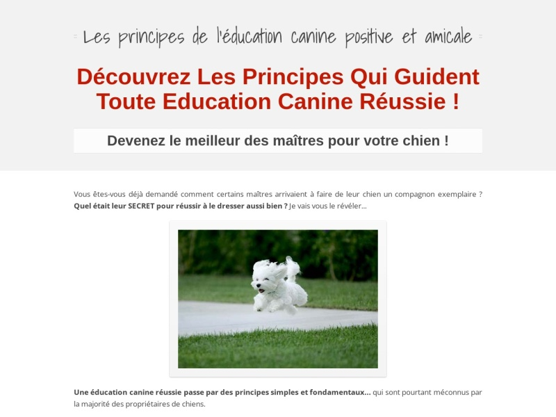 les principes de l'education canine amicale
