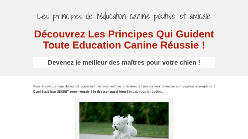 les principes de l'education canine amicale