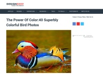 The Power Of Color:40 Superbly Colorful Bird Photos