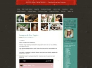Rusty Grunge WordPress Theme example
