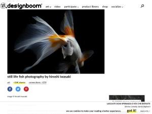 still life fish photography by hiroshi iwasakiのスクリーンショット