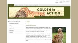 www.golden-in-action.de Vorschau, Golden in Action