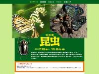 特別展「昆虫」(2018年7月13日(金)~10月8日(月・祝))-国立科学博物館-