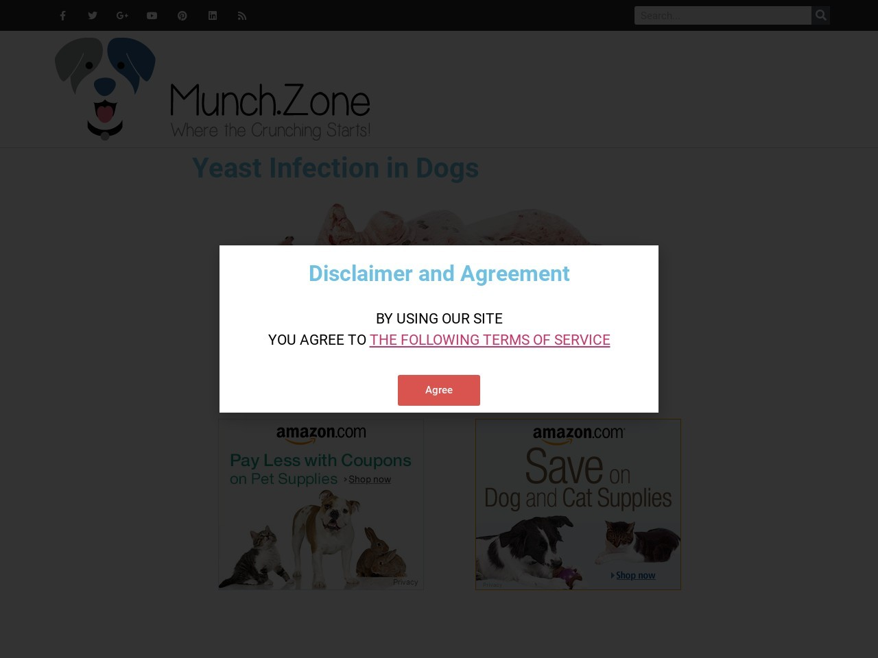 Yeast Infection in Dogs | The Munch Zone