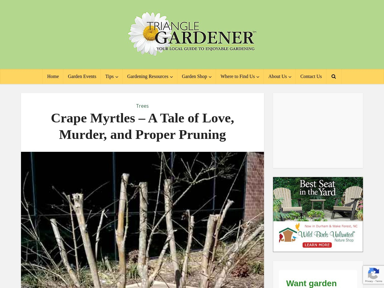 Crape Myrtles – A Tale of Love, Murder, and Proper Pruning