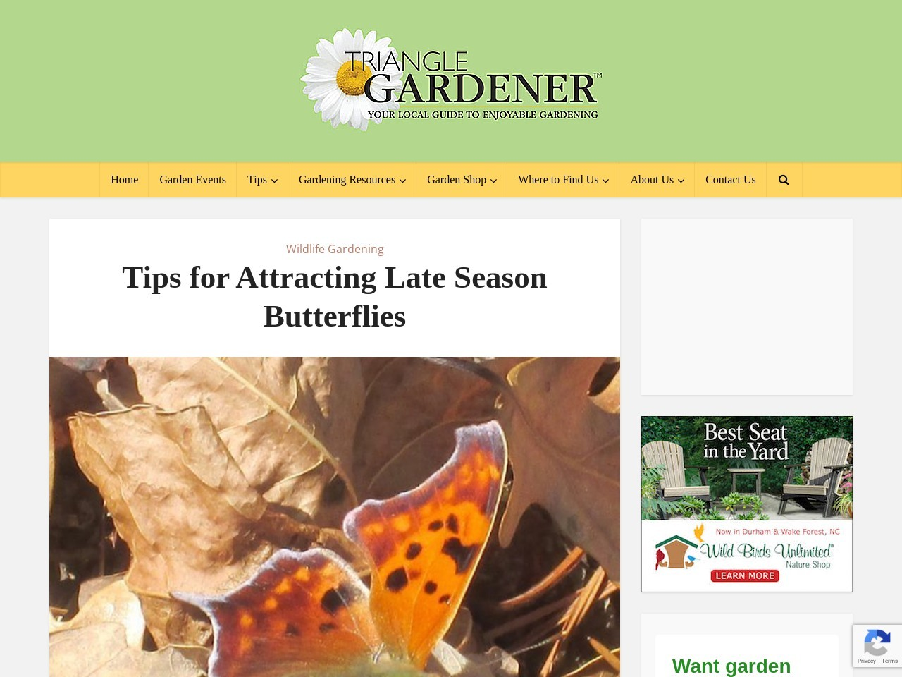Tips for Attracting Late Season Butterflies