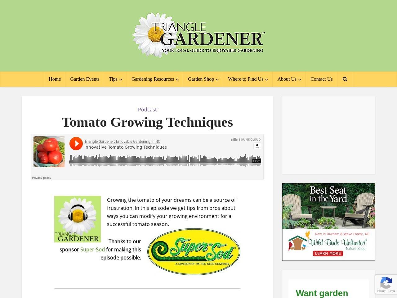 Tomato Growing Techniques