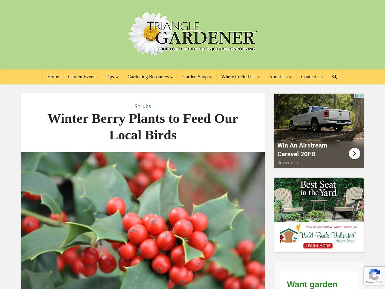 Winter Berry Plants to Feed Our Local Birds