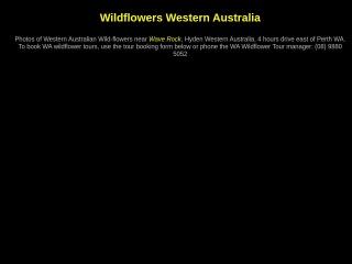 Screenshot for wildflowersaustralia.info