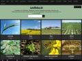 agrarfotodesign.de Vorschau, Agrarfotodesign, Astrid Oldenburg