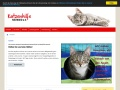 www.katzenhilfe-neuwied.de Vorschau, Katzenhilfe Neuwied e. V.