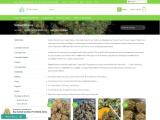 Buy the best Indica Strains In the USA – 420 Green Market