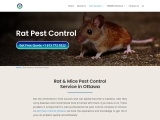 Rat Pest Control in Nepean Ottawa   Rodent Removal Treatment in Nepean Ottawa