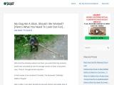 What Happens If A Dog Eats Wood