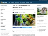 TIPS TO SAFELY MOVE YOUR HOUSEPLANTS