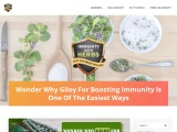 Why Giloy for Boosting Immunity is Best to Do So|EmunCare