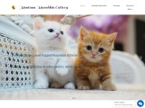 munchkin cats for sale near me