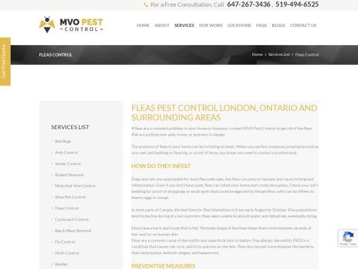 Fleas Pest Control London Ontario