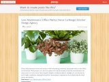 Highly Suggested Low Maintenance Office Plants | Decor La Rouge | Interior Design Agency