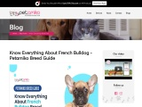 Know Everything About French Bulldog – Petamiko Breed Guide