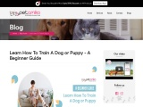 Learn How To Train A Dog or Puppy – A Beginner Guide
