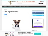 Can Dog Eats Olives   Can Dogs Eat Black Olives   Petsfoodnutrition