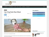 Can Dog Eats Raw Meat   can dogs eat raw beef   Petsfoodnutrition.com