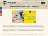 How Do Professional Dog Trainers Train Dogs?