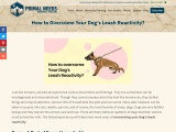 How To Overcome Your Dog's Leash Reactivity? | Primal Needs