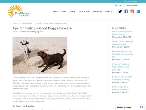 Tips for Finding a Good Doggie Daycare