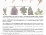 Herbal Remedies For Fatty  – Best Herbal Medicine For Liver