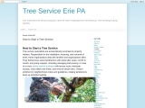 How to Start a Tree Service in erie pa?