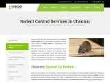 Rat Control Services in Chennai