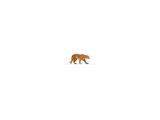 bandhavgarh accommodation | bandhavgarh hotels and resorts