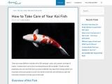 How to Take Care of Your Koi Fish – AquariumWorlds