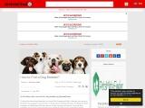 How to Find a Dog Breeder? PetMateFinder