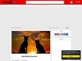 Dog Mating Services | Find Right Mate For Your Dog