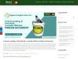 Control Landing of Pest Birds: Consider Effective Pigeon Deterrent