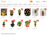 Buy Cactuses And Succulents Plants Online India – Clayie.com