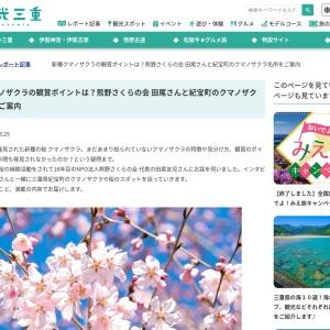 新種クマノザクラの観賞ポイントは?熊野さくらの会 田尾さんと紀宝町のクマノザクラ名所をご案内|取材レポート|観光三重