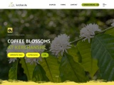 coffee exporters in ethiopia | ethiopian coffee suppliers