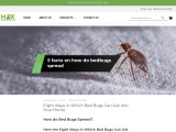 Eight Ways in Which Bed Bugs Can Get into Your Home