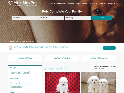 Bichon Frise Puppies for sale: Price in India | Mr n Mrs Pet