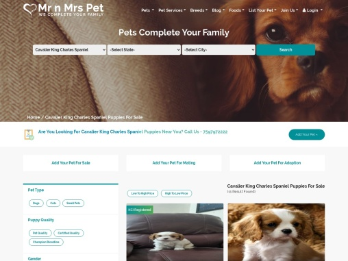 Cavalier King Charles Spaniel Puppies for sale: Price in India | Mr n Mrs Pet