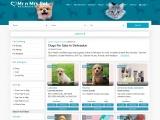 Buy Healthy Dogs & Puppies for Sale in Dehradun- Mr n Mrs Pet
