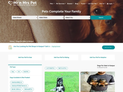 Buy Healthy Dogs & Puppies for Sale in Kanpur – Mr n Mrs Pet