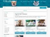Buy Healthy Dogs & Puppies for Sale in Vadodara- Mr n Mrs Pet