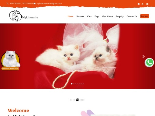 Cats For Sale | Kitten for Sale in Jammu