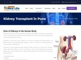 Kidney Transplant in Pune | Kidney Specialist in Pune