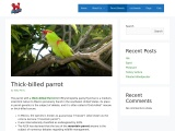 Who Is Thick-Billed Parrot In Details